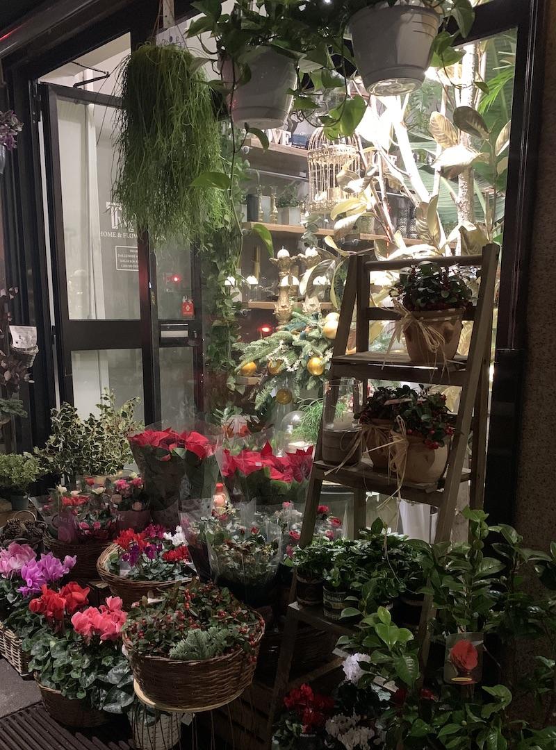 fiori e piante twenty viale abruzzi